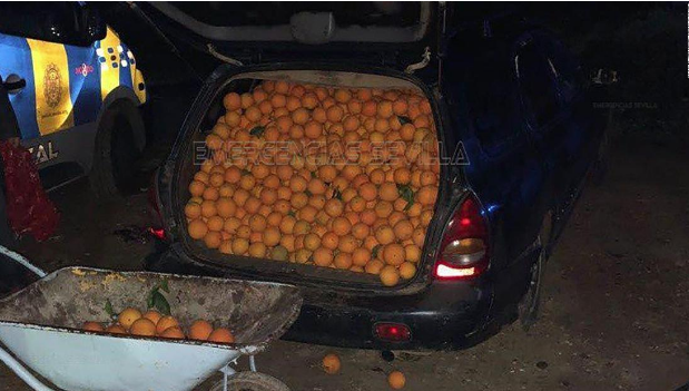 Police in Spain uncover 4 tons of oranges in a auto chase