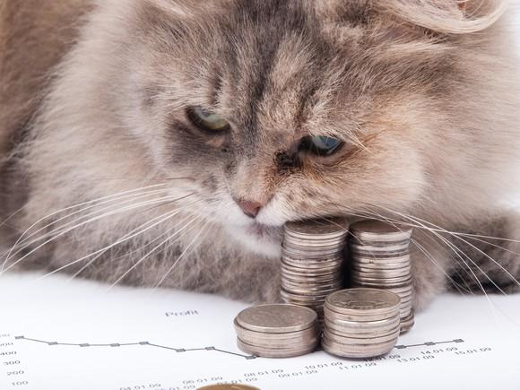 cat-and-coins_large