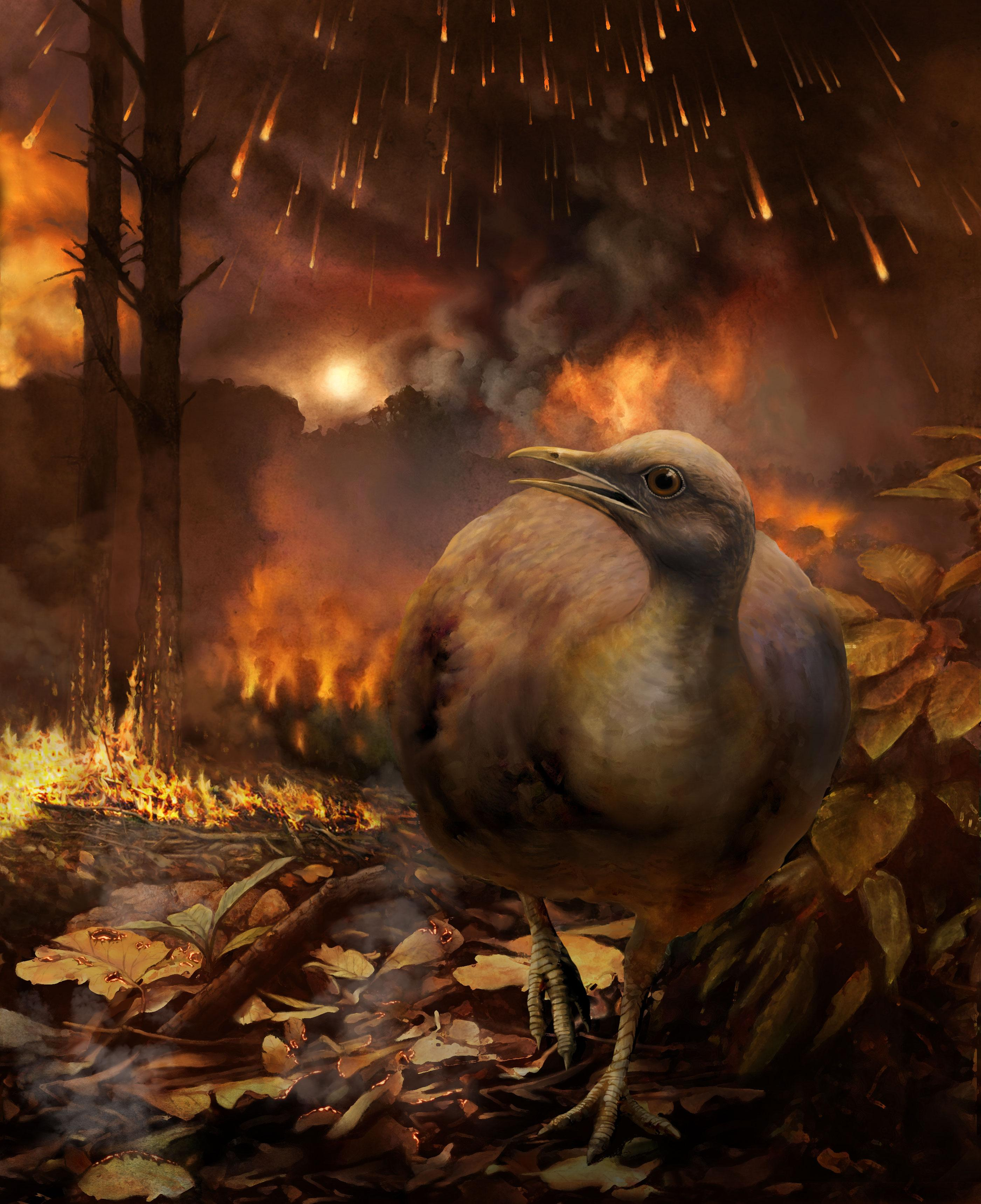 Ground-Dwelling Bird Escaping Forest Fire