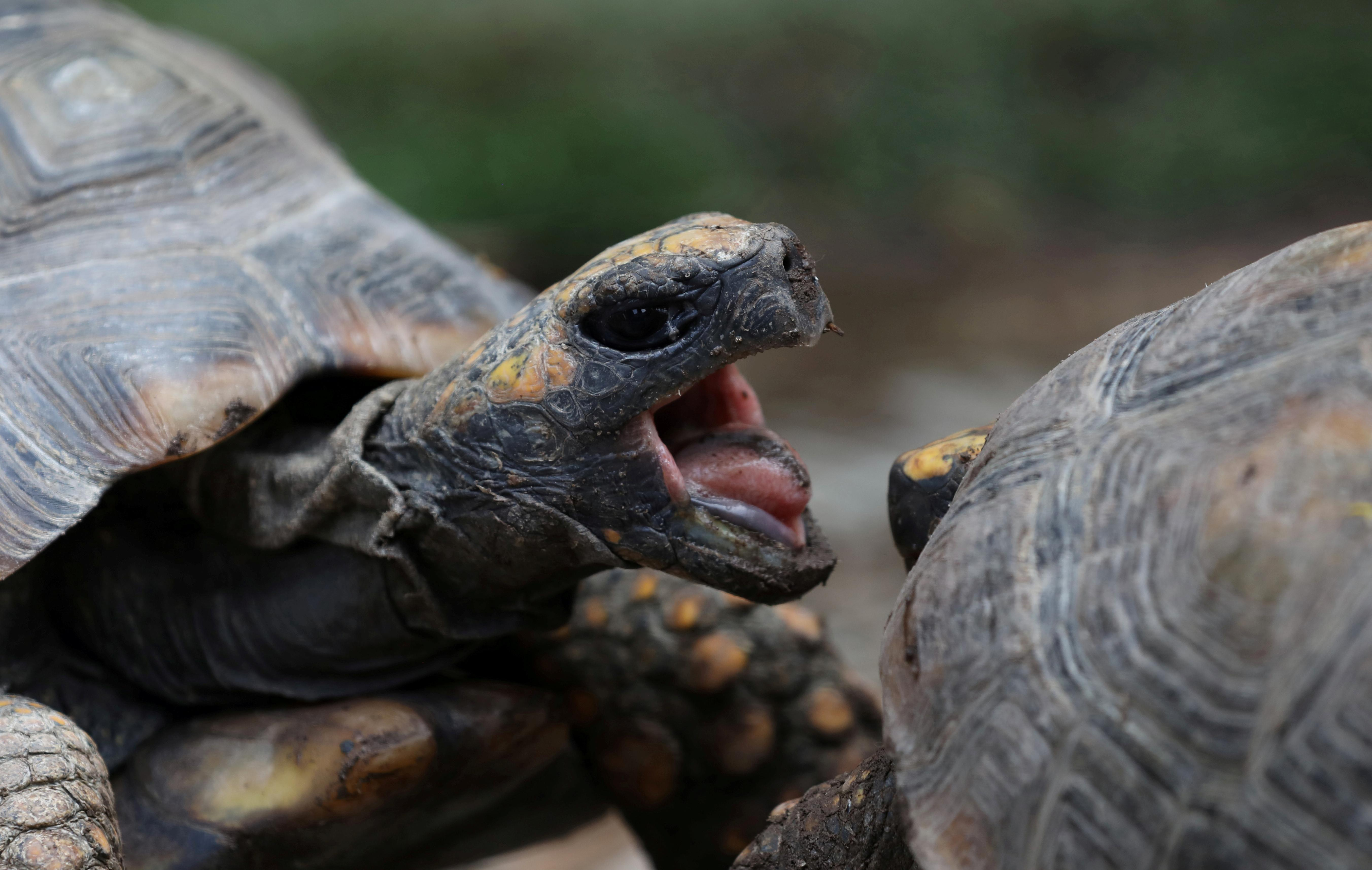 Florida man threatens to destroy everyone with army of turtles, police say