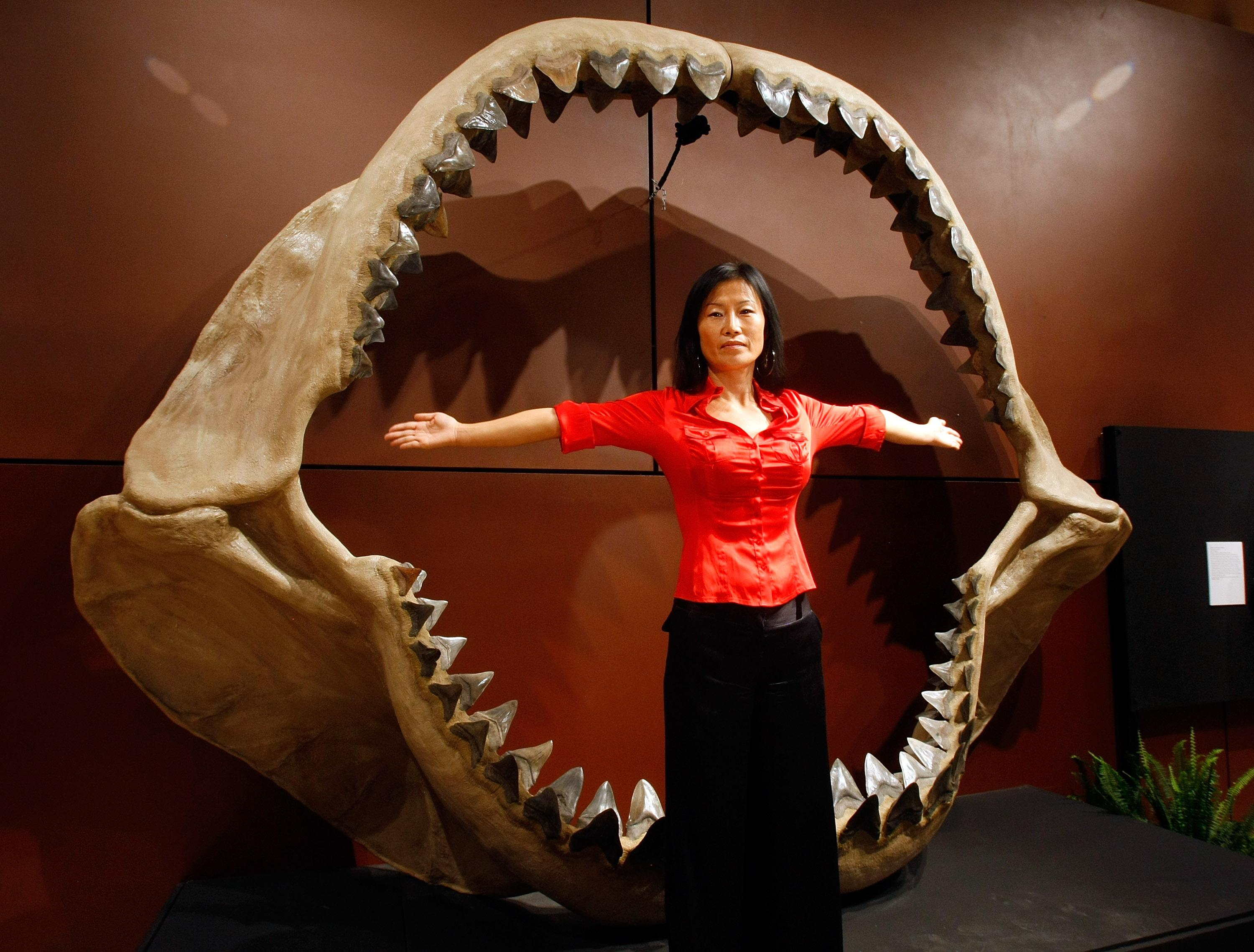 Is Megalodon Still Alive? Facts About The Real Shark