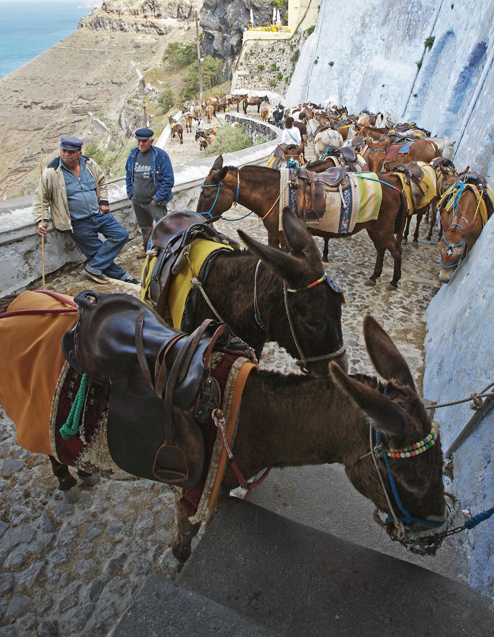 In Greece, banned fat tourists ride a donkey 93