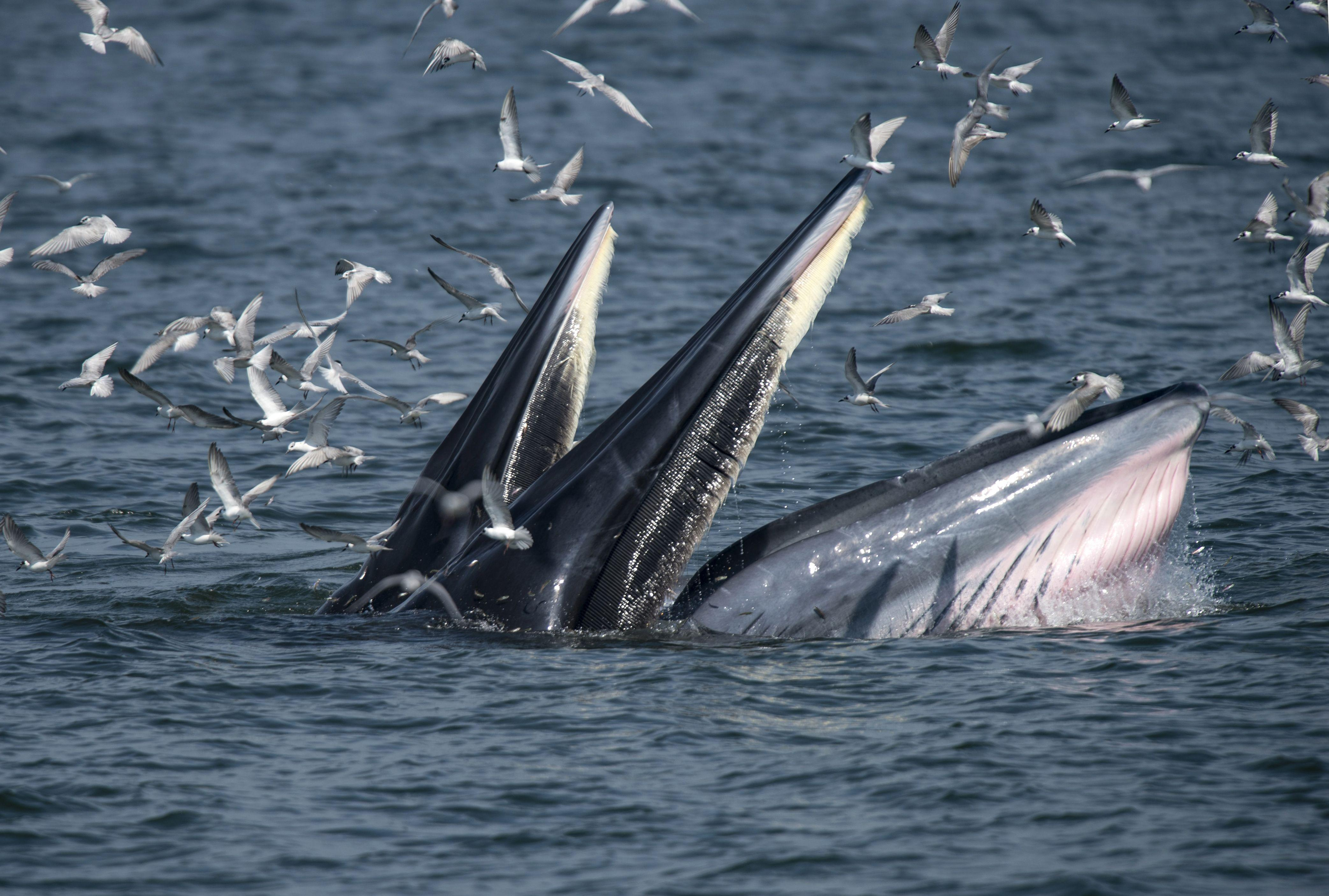Lucky escape for diver trapped in whale's jaws
