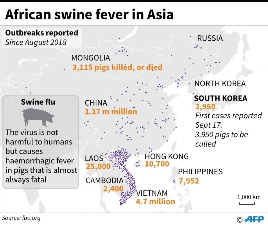 Map showing parts of Asia, where African swine fever spread has led to millions of pigs being culled since August 2018, as of Sep 17, 2019, according to FAO.