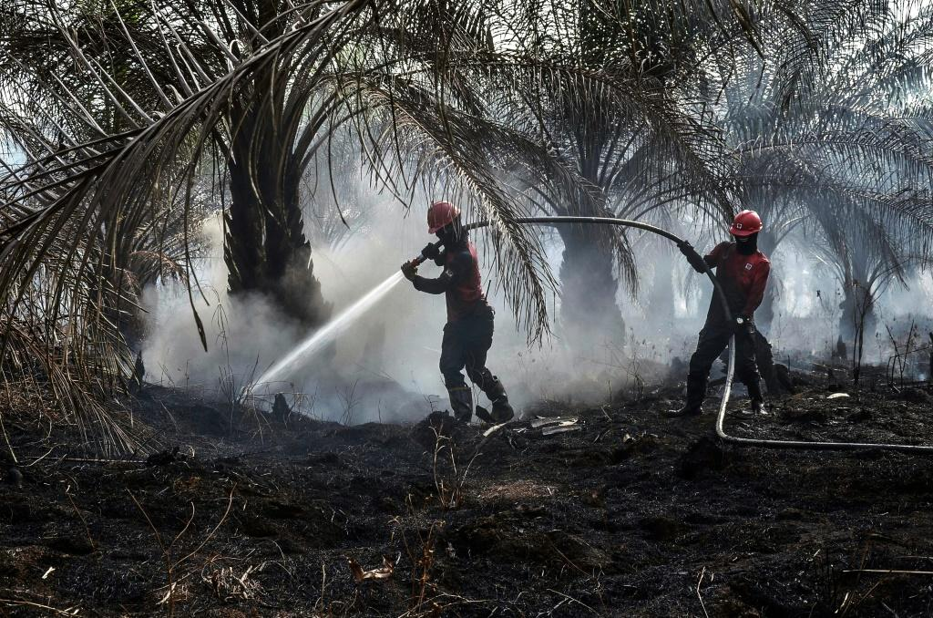Palm oil production has been blamed by environmentalists for driving massive deforestation