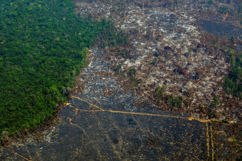 There is growing alarm at the deforestation of the Amazon