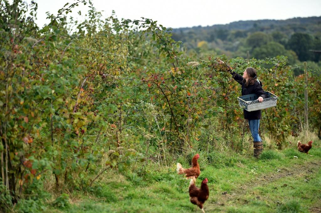 """Organic farm co-manager Ellie Woodcock of Brambletye Fruit in East Sussex fears Brexit will have """"quite a negative impact"""", opening the door to less stringent checks on food"""