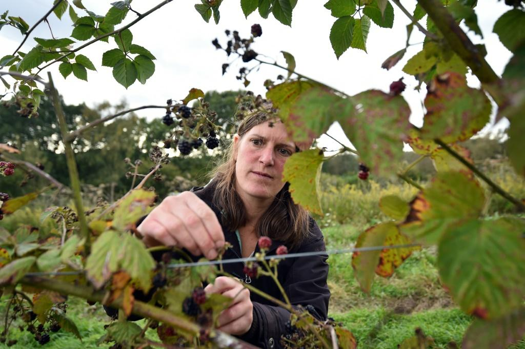 Organic farm co-manager Ellie Woodcock only employs locally because she has no facilities to house seasonal workers but has faced great difficulties finding anyone