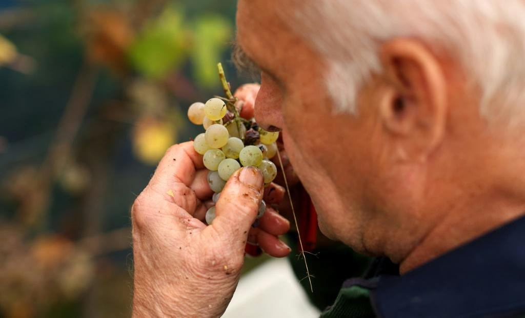 Albrecht Dettmer helps to ensure that the quality of the wine remains high for domestic and foreign clients