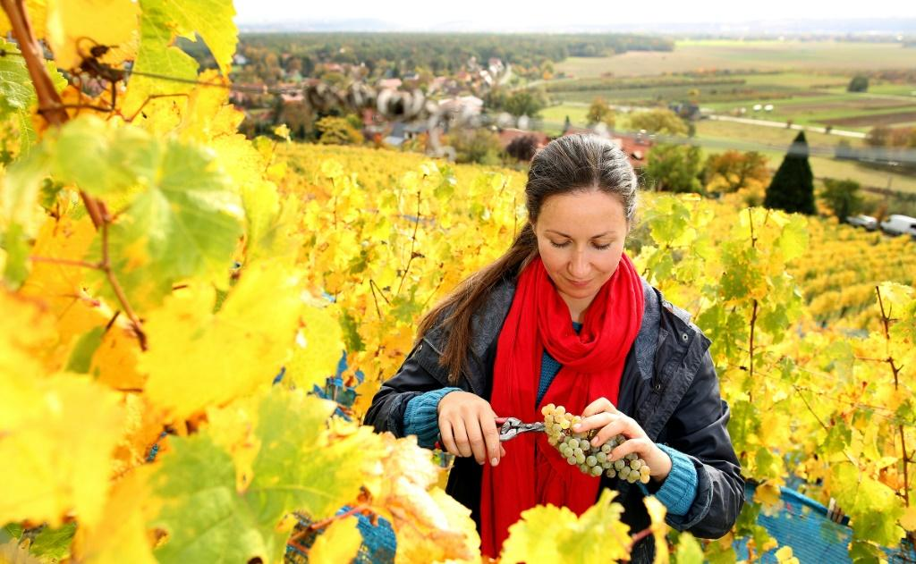 Fibia Olariu is one of a handful of employees who produce about 15,000 litres of wine each year