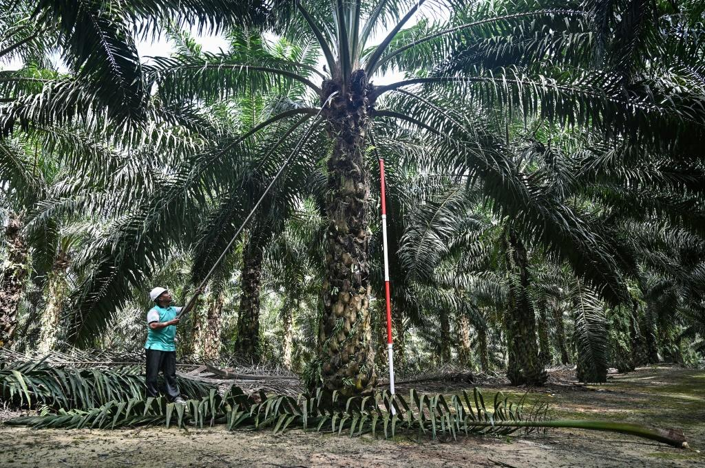 Malaysia's mammoth palm oil sector is under threat after PM Mahathir Mohamad criticised India's moves in the Kashmir region