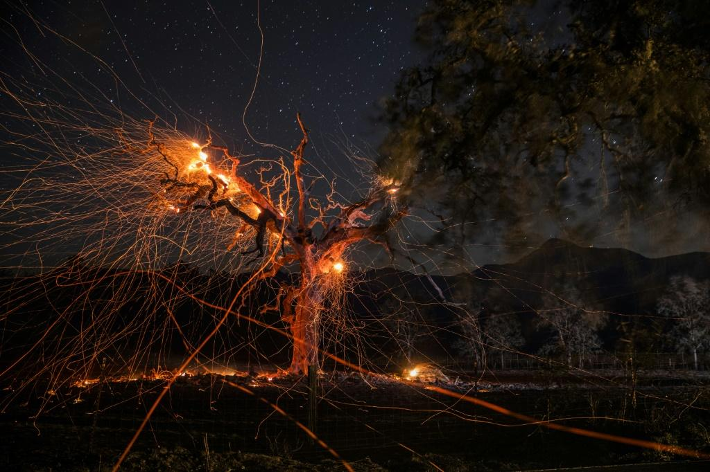 A long exposure photograph shows a tree burning during the Kincade fire off Highway 128, east of Healdsburg, California on October 29, 2019