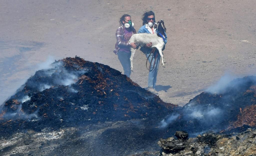 Laura Horvitz (R) and Robyn Phipps help rescue goats from a ranch near the Reagan Presidential Library in Simi Valley during the Easy Fire in Simi Valley, California on October 30, 2019