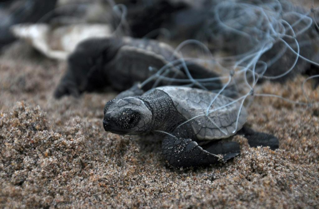 Abandoned fishing nets kill and injure more than 100,000 whales, dolphins, seals and turtles annually, according to UK-based charity World Animal Protection