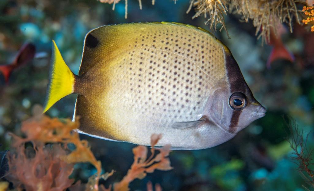 Environmental groups are lobbying the UN to come up with comprehensive governance systems that better protect marine life