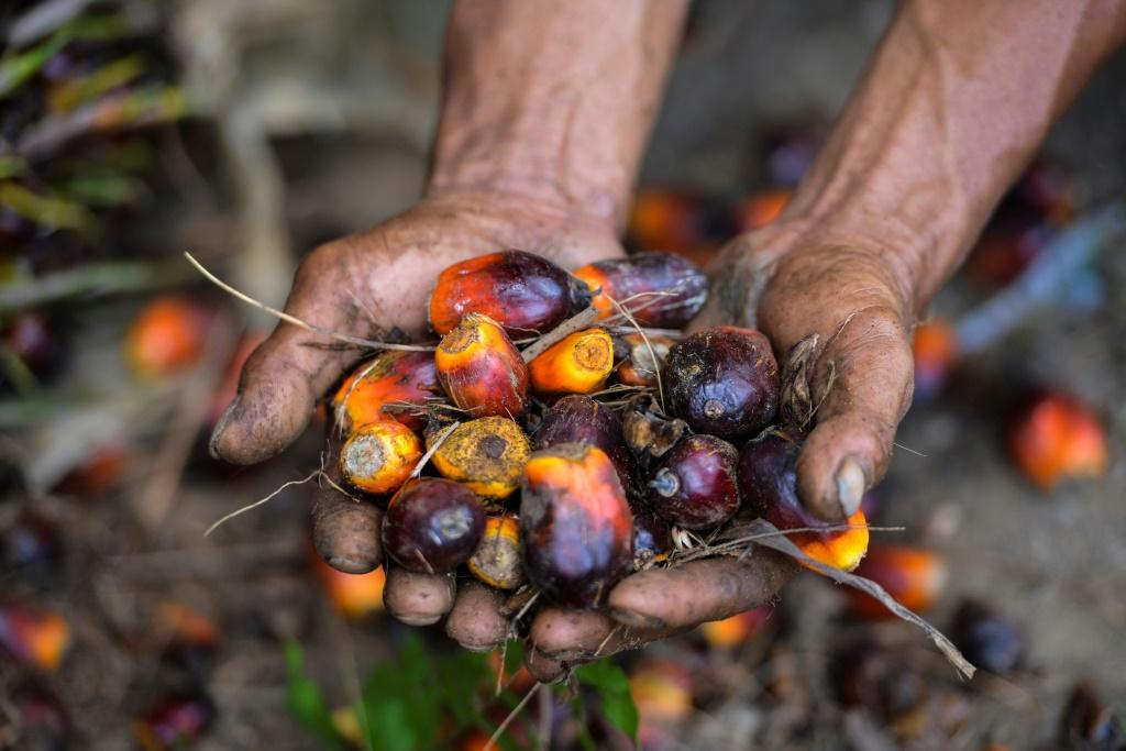 Slumping prices for key commodities such as palm oil have weighed down Indonesia's economic growth