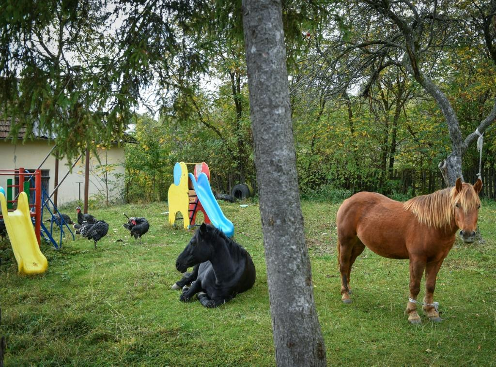 Two horses graze peacefully in the playground of a school that was closed four years ago