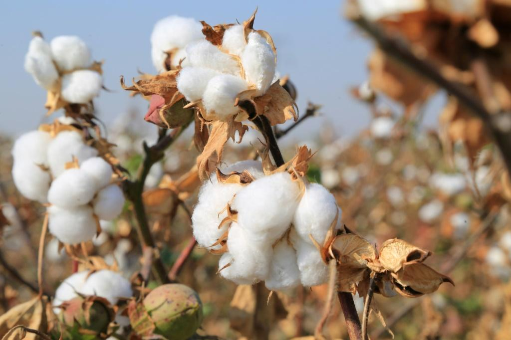 Athough the US has taken Uzbekistan off the list of countries accused of using child labour in the cotton industry, other countries are still unconvinced that it has ended there