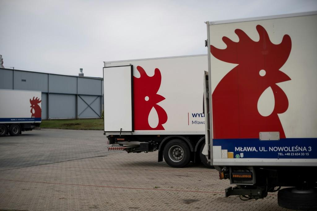 Many of Poland's chicks are exported, notably to Belarus and Ukraine