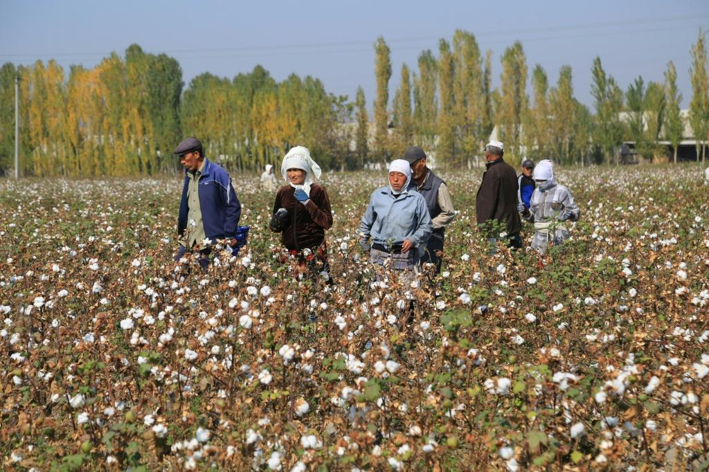 Uzbekistan started phasing out child labour in the cotton fields with the death of the country's first leader, Islam Karimov
