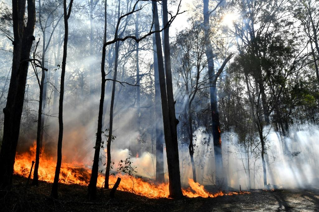 New South Wales is the Australian state worst affected by a series of catastrophic fires