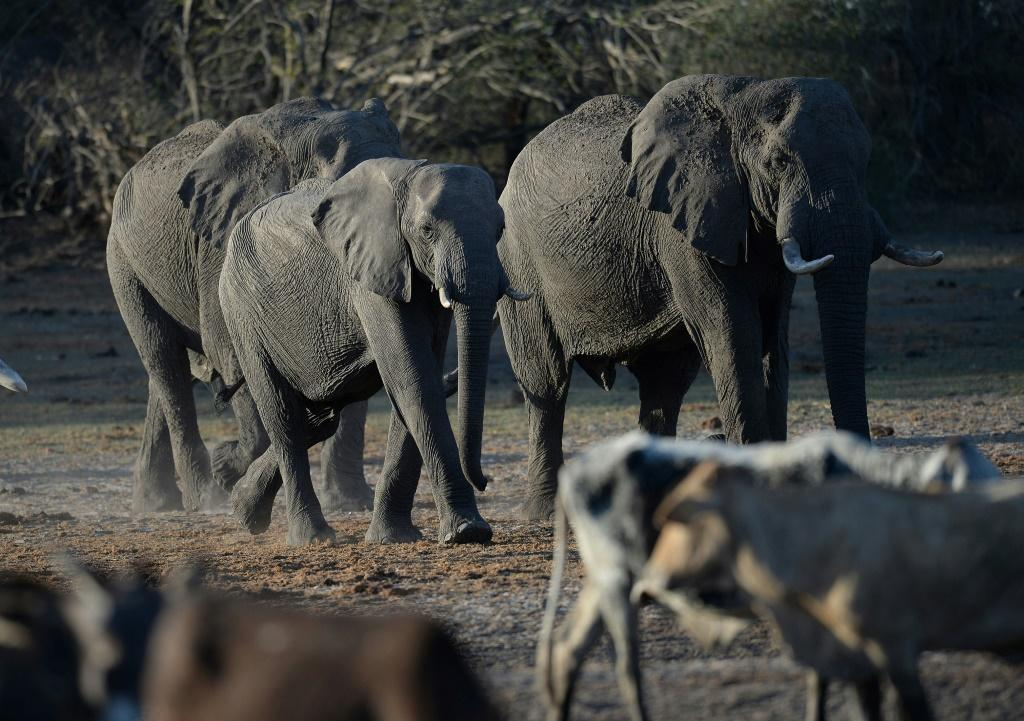Botswana has fended off criticism of lifting a hunting ban, saying it would not threaten the elephant population