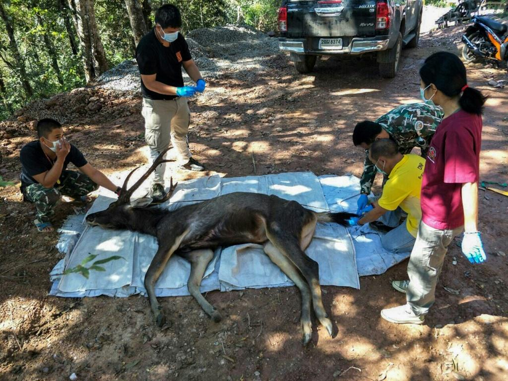 Officials said the 10-year-old deer was found dead in a national park in Nan province, around 630 kms (390 miles) north of capital Bangkok