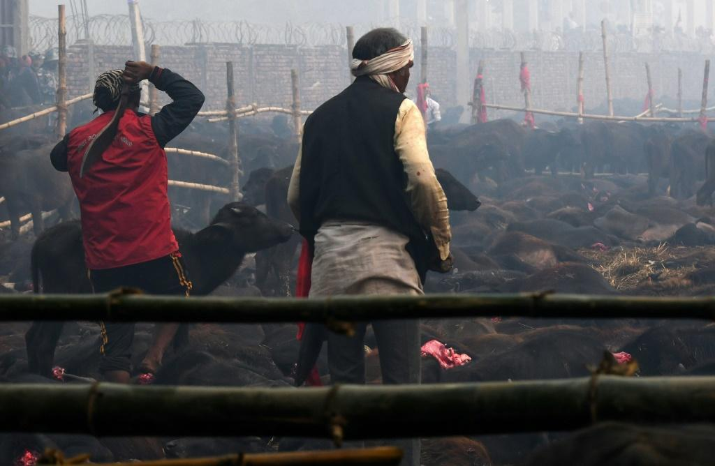 An estimated 200,000 animalsranging from goats to rats were butcheredduring the last two-day Gadhimai Festival in 2014