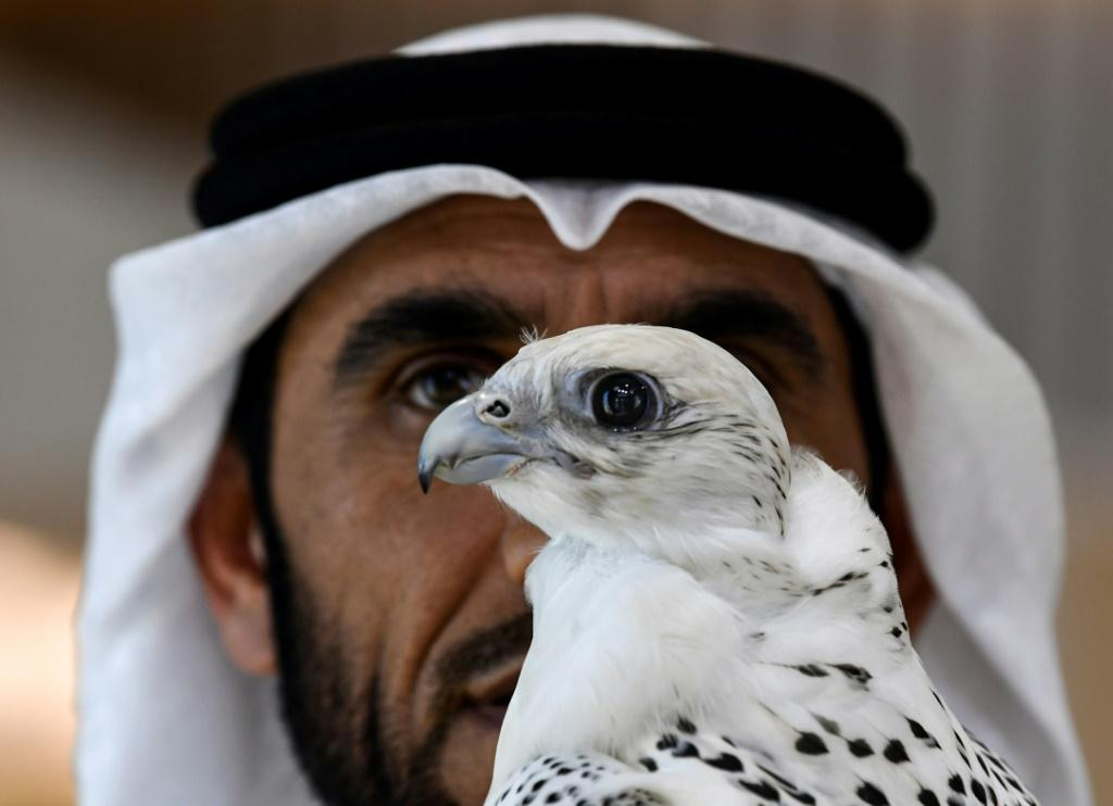 A man with a perched falcon at the Abu Dhabi International Hunting and Equestrian Exhibition in August