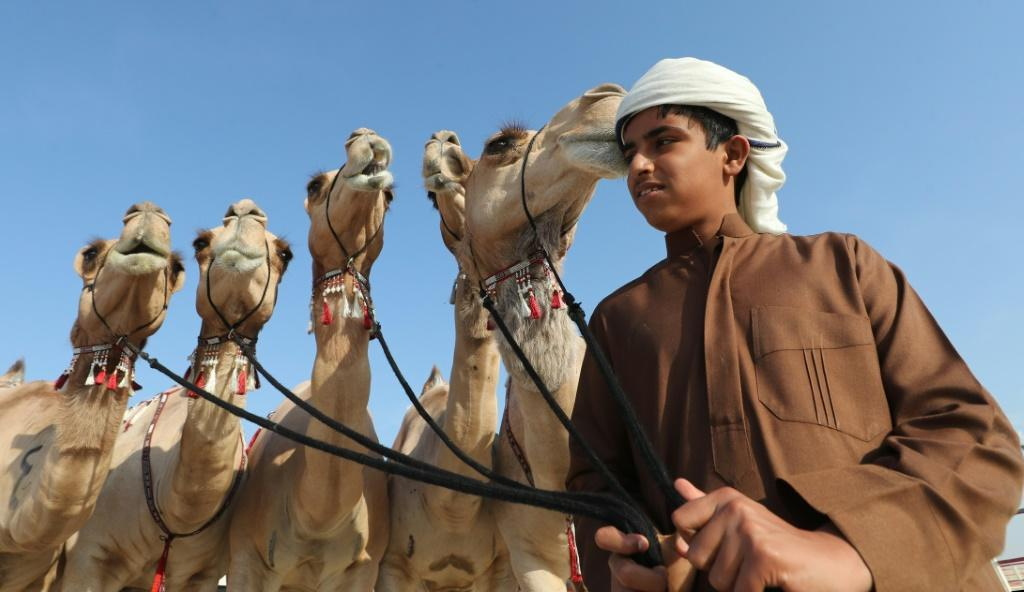 An Emirati child walks camels during the Mazayin Dhafra Camel Festival in the desert near the city of Madinat Zayed in January