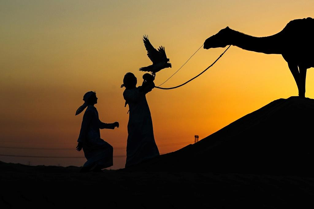 An Emirati falconer releases a falcon while on a hunting trip by Al-Marzoom Hunting Association at Al-Marzoom Falconry Reserve