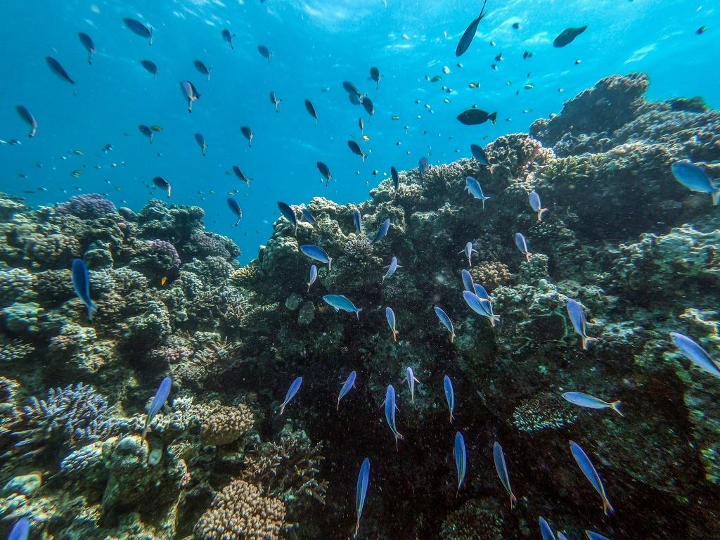 The dazzling turquoise waters and coral reefs off Egypt's Red Sea coast attract scuba divers, but plastic trash and global warming threaten the fragile marine ecosystem.