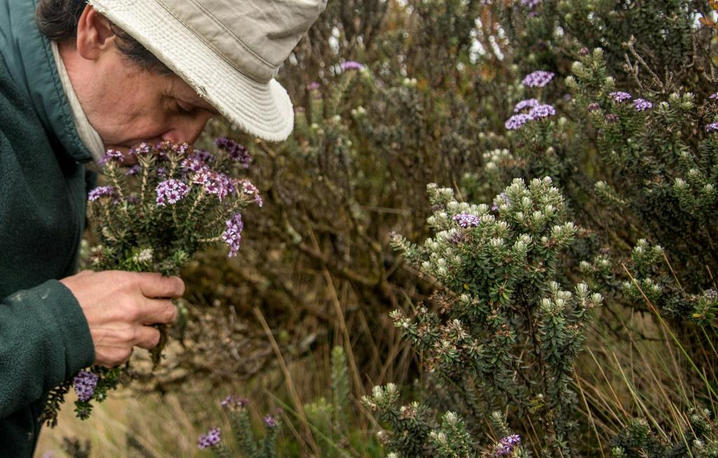 Colombian botanist Julio Betancur documents all the plants he collects in a book of the South American country's vast biodiversity
