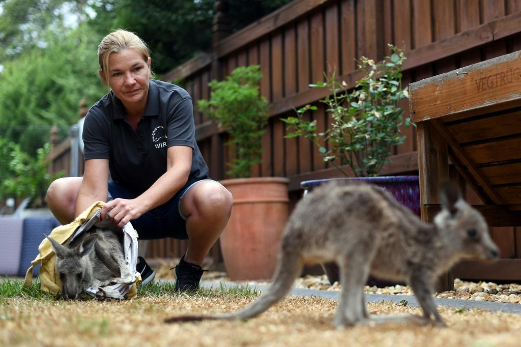 Sarah Price of wildlife rescue group WIRES is among the volunteers helping to save and rehabilitate animals affected by the bushfires