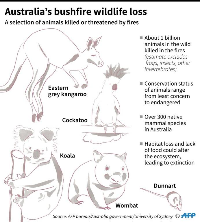 Selection of animals killed or threatened by catastrophic bushfires in Australia.