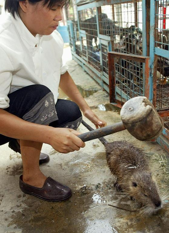 A 2002 image shows a kitchen worker using a wooden mallet to hit a water rat on the head to stun it before it is killed for a meal in a restaurant in the southern Chinese city of Guangzhou