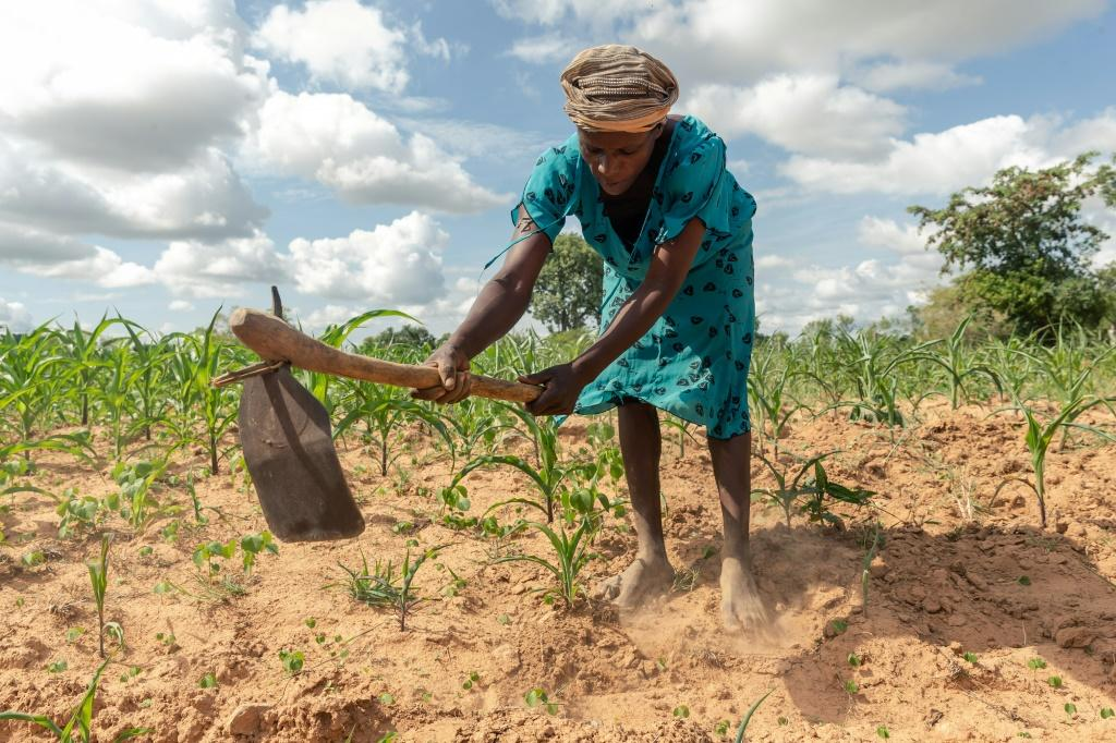 Climate extremes: A year ago, Josephine Ganye was hit by a devastating cyclone -- now she is struggling with a crippling drought