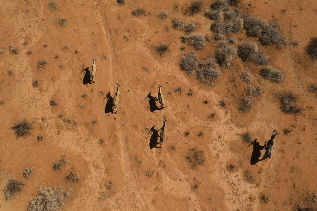 Waterbucks run through the Thuru Lodge game reserve. Thousands of animals have been killed by the drought