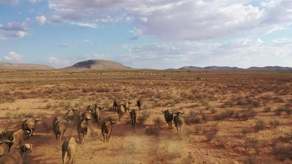 South Africa's northern Kalahari region is renowned for its dry and arid climate - an environment the wildlife and livestock are accustomed to. However, an extreme drought has killed off not only many animals, but also tourism to several farms.