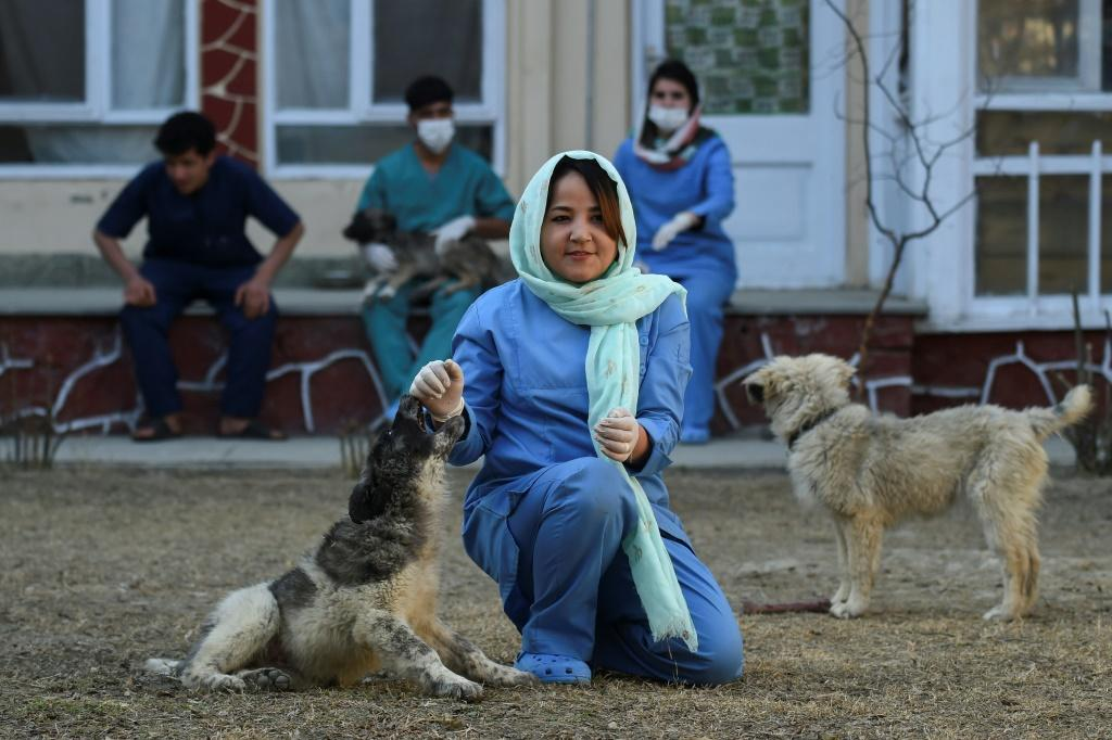Head Veterinarian Tahera Rezai is pessimistic about her prospects if the insurgentsreturn to government, even in a truncated capacity