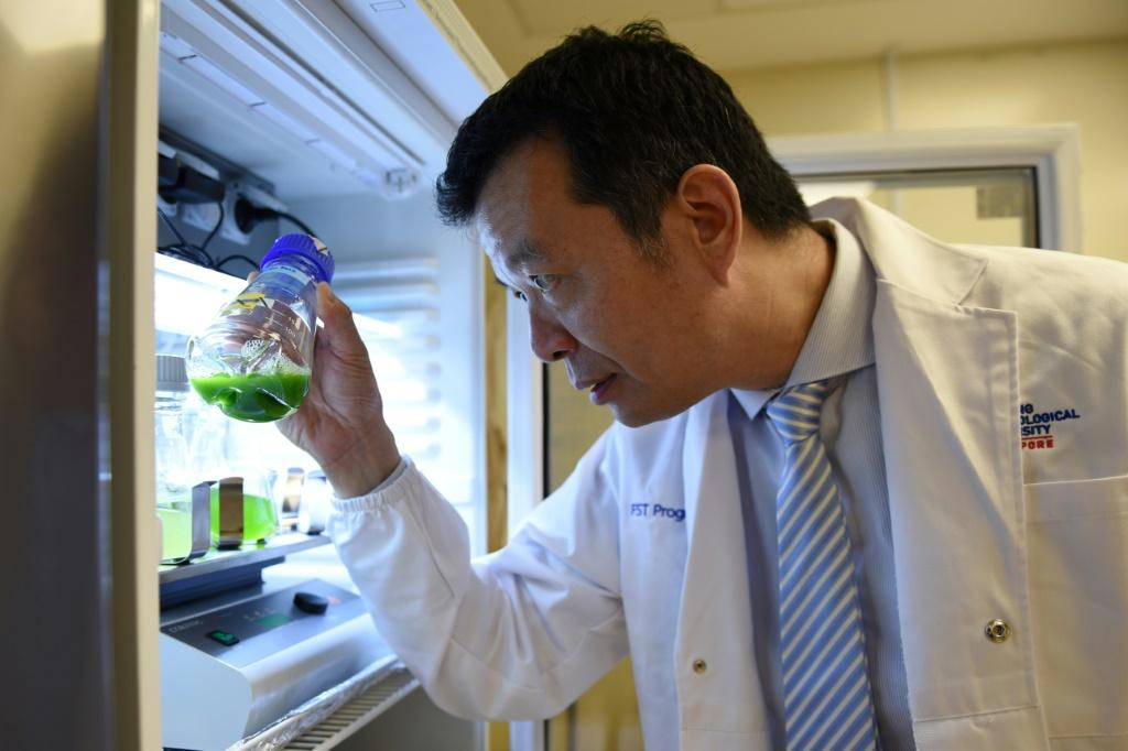 William Chen, director of the Food Science and Technology Programme at Nanyang Technological University, looking at microalgae samples in a research laboratory in Singapore