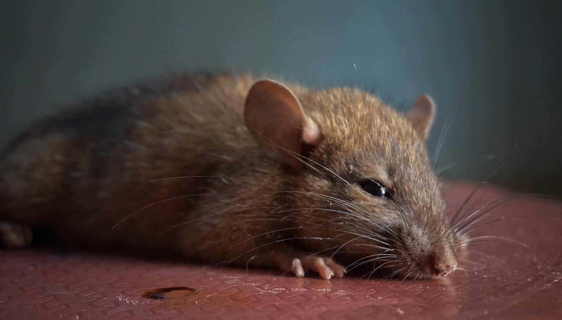 coronavirus to hantavirus looming threat