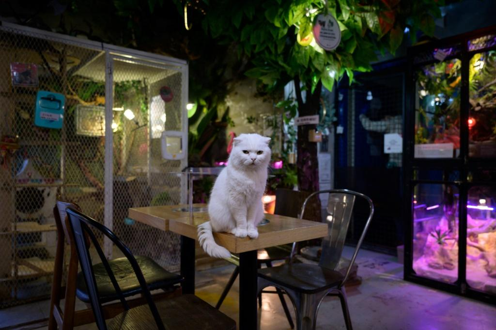 The owner of the Raccoon Cafe Table A in Seoul says people have avoided the business after hearing the coronavirus was first contracted from a wild animal