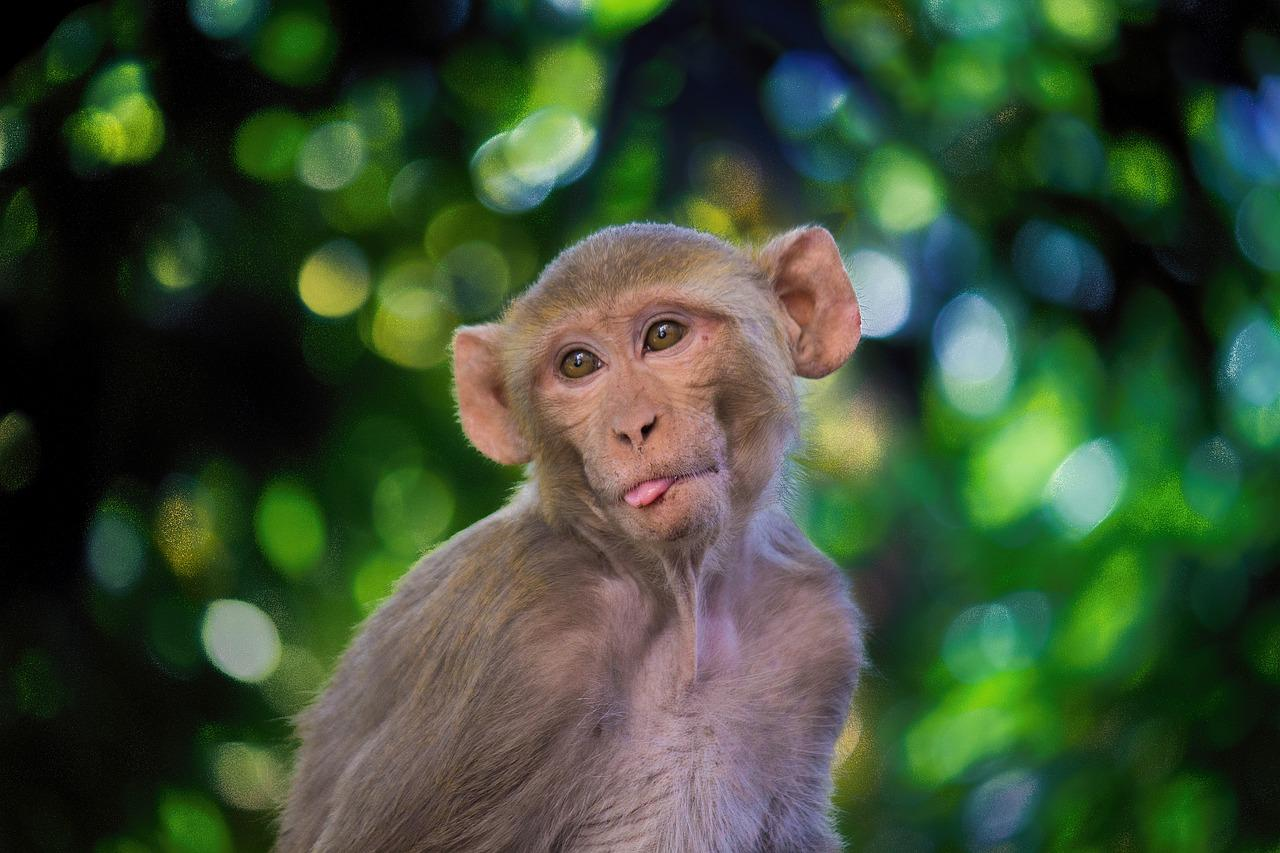 6 monkeys given an experimental drug by oxford didn't get coronavirus even after heavy exposure