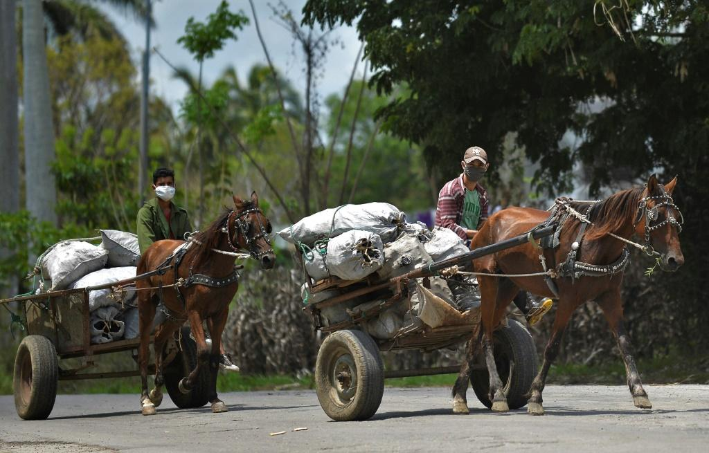 Cuban men wearing face masks transport food on their carts in the town of Bahia Honda - the country's economy is suffering due to the coronavirus crisis