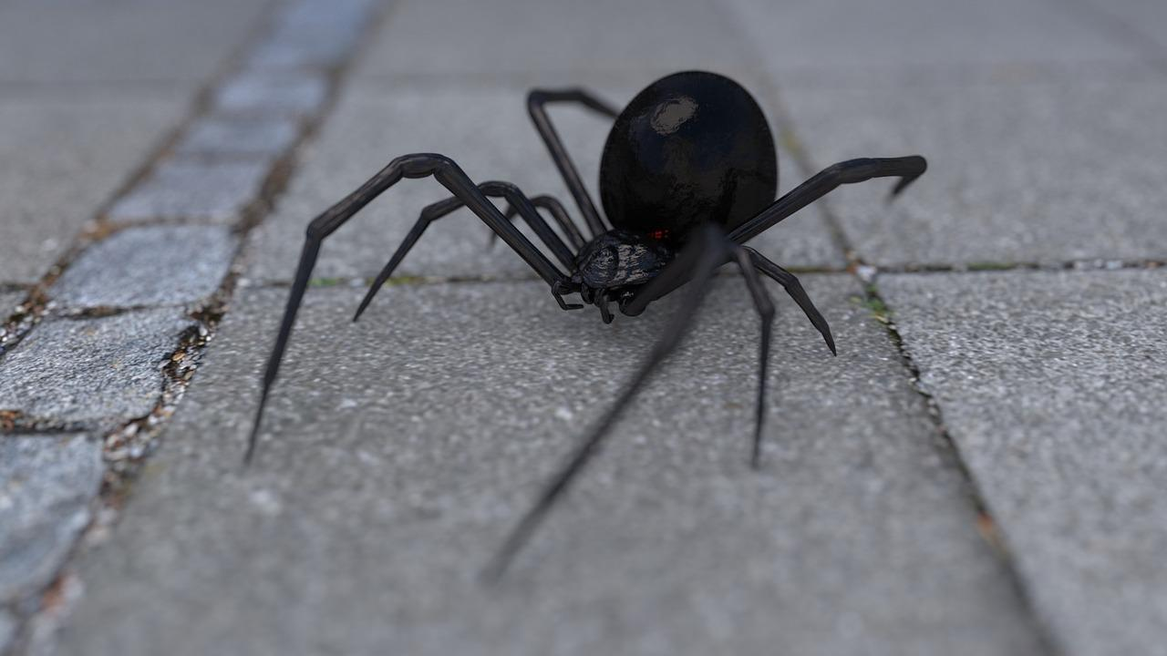 Three brothers are hospitalised after letting a black widow spider bite them