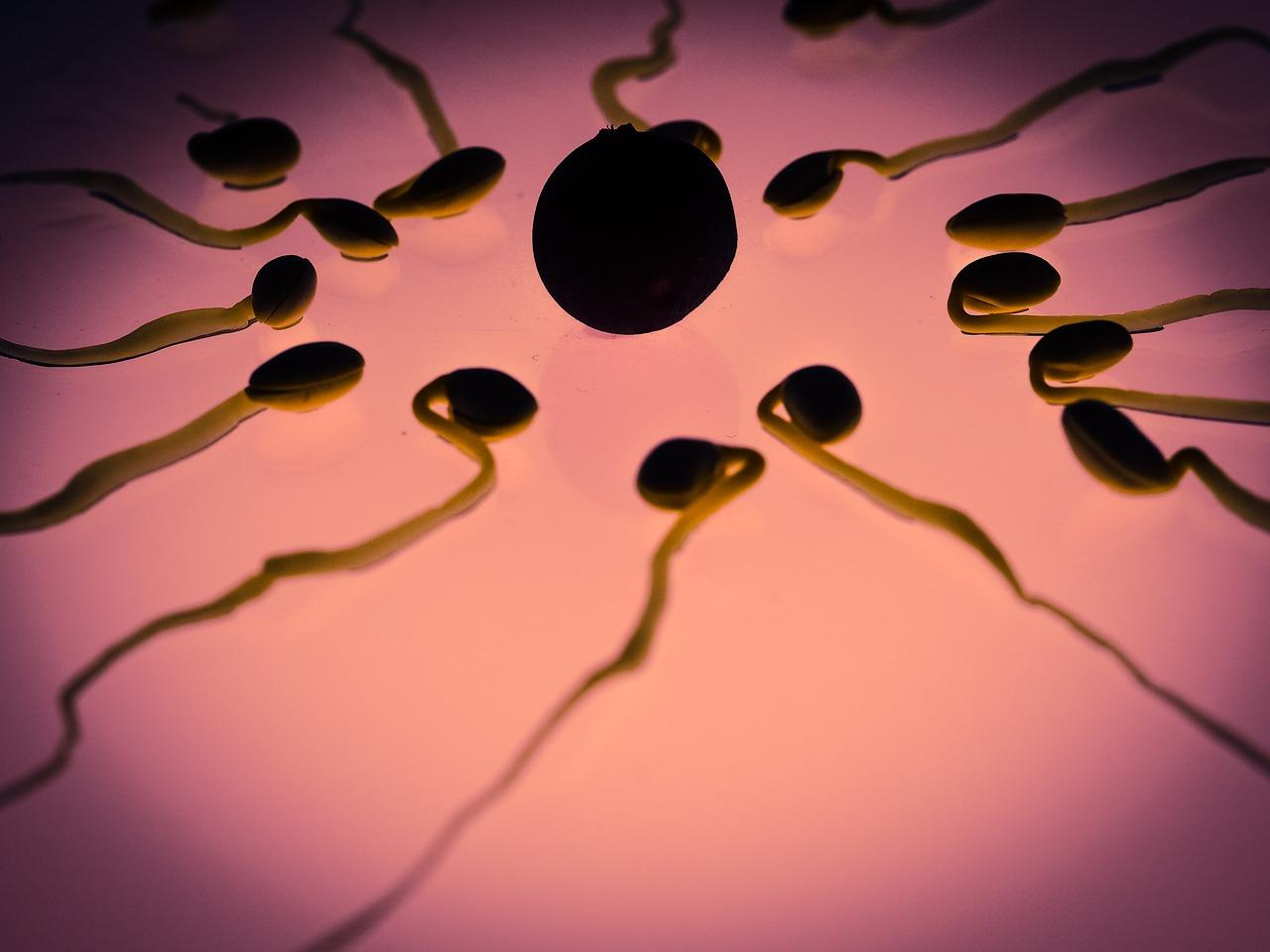 new study reveals egg cells are very choosy when it comes to the sperm that will fertilize it