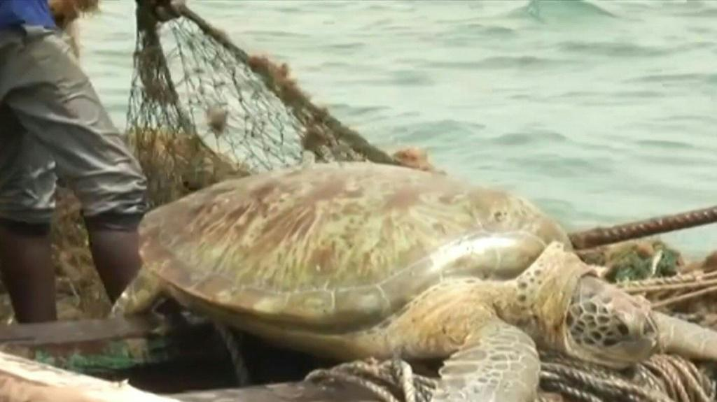 "In a classic case of ""poacher turning gamekeeper"", the fishermen of Senegal have joined forces to protect one of the ocean's most endangered species: the sea turtle."
