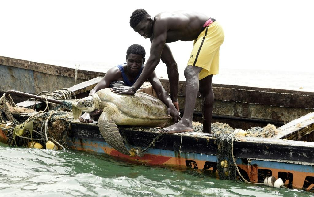 Senegalese fishermen rescue a sea turtle from their nets and return it to the sea
