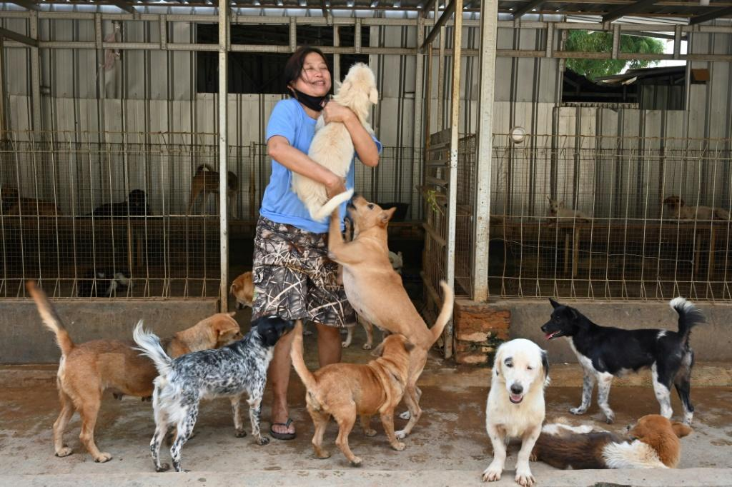 Somali and her team rescued dozens of puppies bound for a local Korean eatery this month